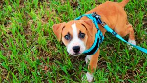 Best Dog Harness For Running