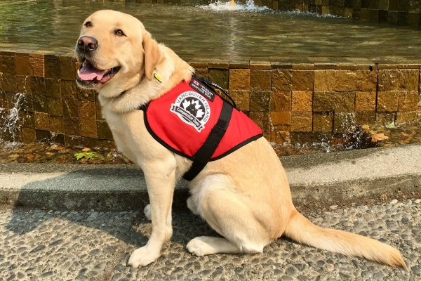 Service Dog Vest With Pockets